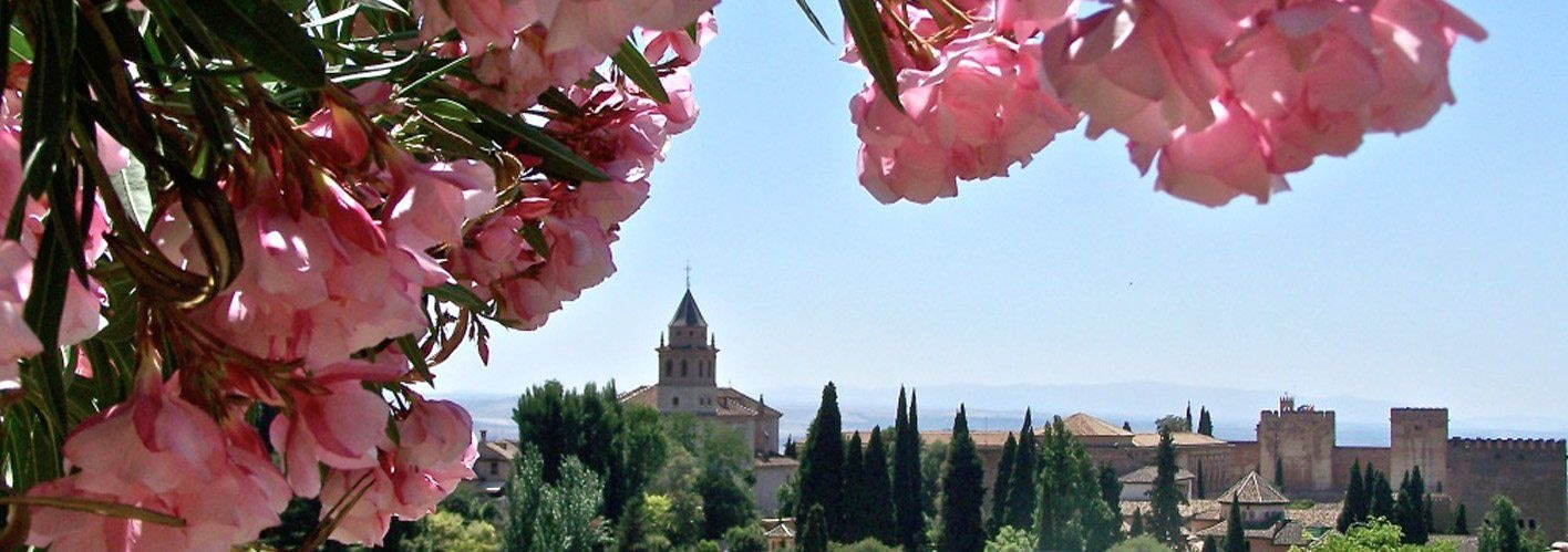 pink flowers on a tree with a castle in a forest in the background