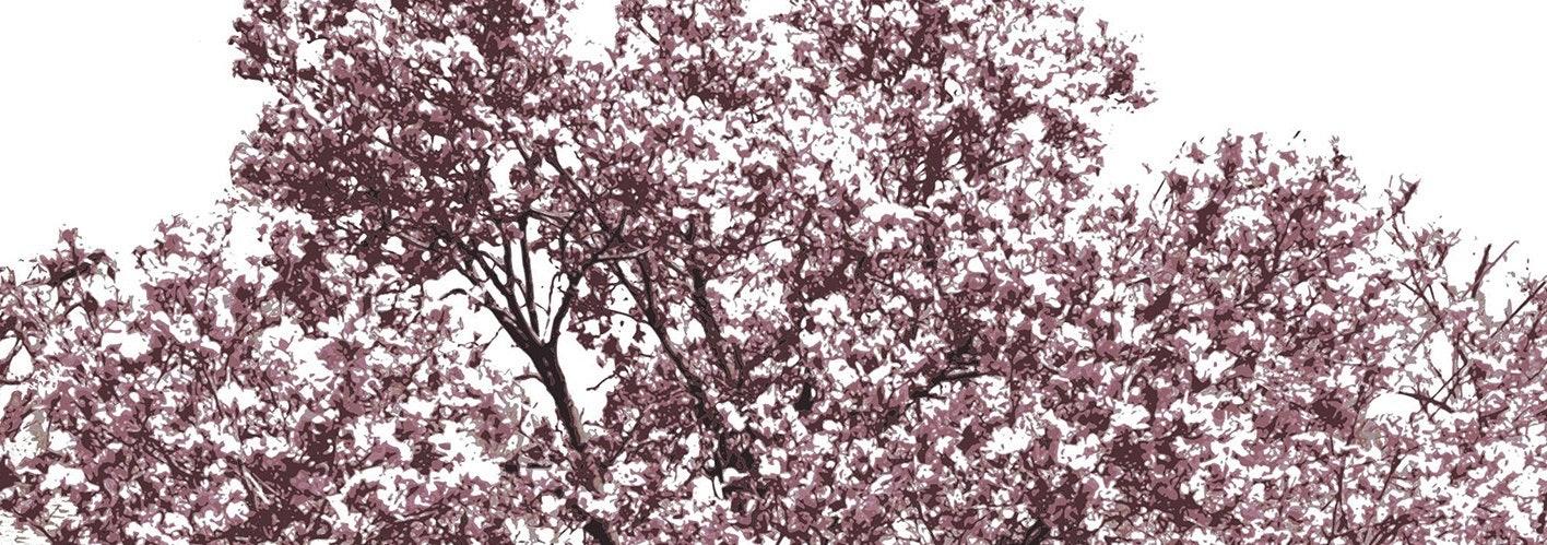 purple leaves and tree limbs