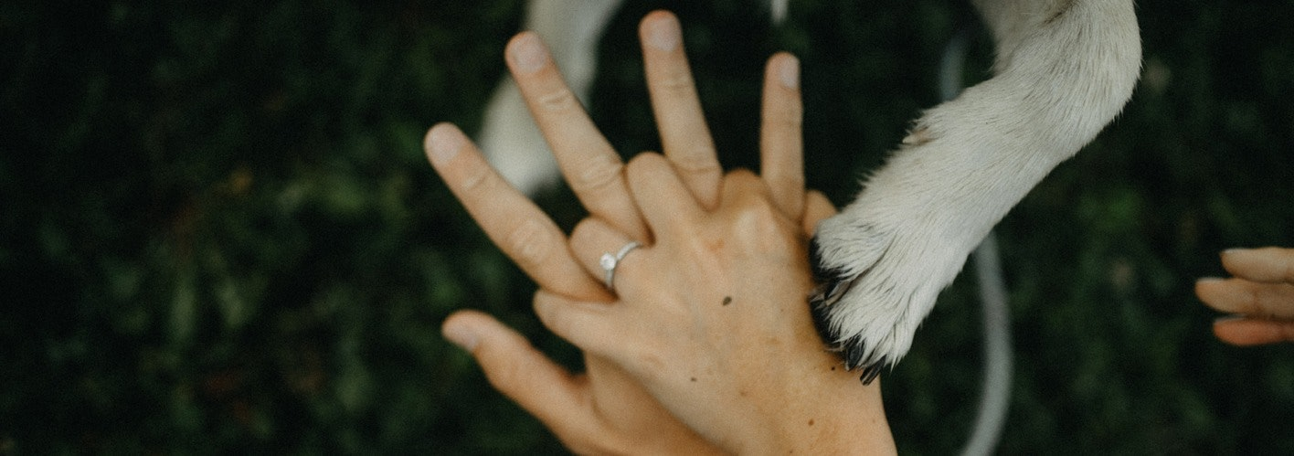 Two Hands Holding with Dog Paw